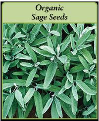 Organic Sage Seeds