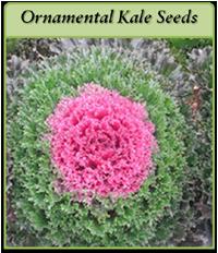 ornamental-kale-seeds-logo.png