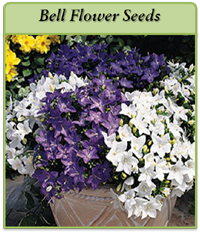 p-bell-flower-seeds-logo.png