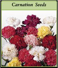 p-carnation-seeds-logo.png