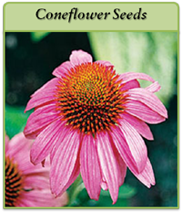 p-coneflower-seeds-logo.png