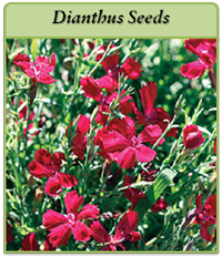 p-dianthus-seeds-logo.png