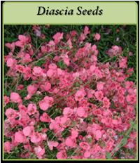 p-diascia-seeds-logo.png