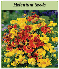 p-helenium-seeds-logo.png