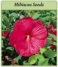 p-hibiscus-seeds-logo.png