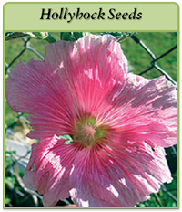 p-hollyhock-seeds-logo.png