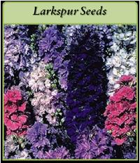 p-larkspur-seeds-logo.png