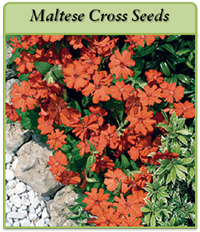 p-maltese-cross-seeds-logo.png