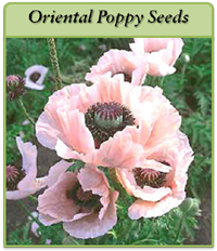 p-oriental-poppy-seeds-logo.png