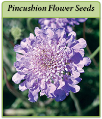 p-pincushion-flower-seeds-logo.png