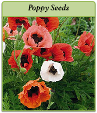 p-poppy-seeds-logo.png
