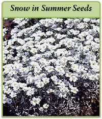 p-snow-in-summer-seeds-logo.png