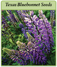 p-texas-bluebonnet-seeds-logo.png