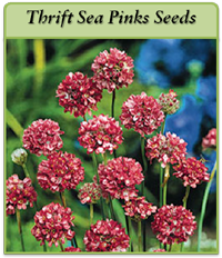 p-thrift-sea-pinks-seeds-logo.png