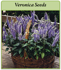 p-veronica-seeds-logo.png