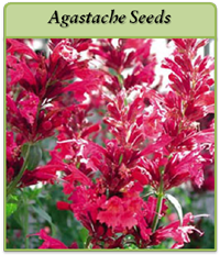 pagastache-seeds-logo.png
