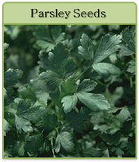 Parsley Seeds