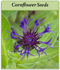 pcornflower-seeds-logo.png