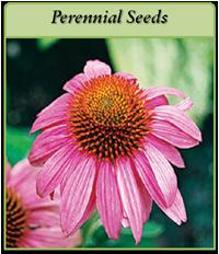 perennial-seeds-logo.png