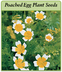 poached-egg-plant-logo.png