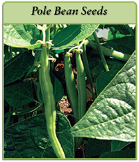 pole-bean-seeds-logo.png