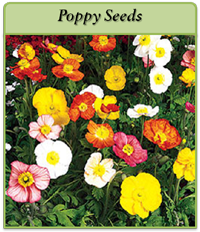 poppy-seeds-logo.png