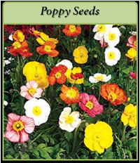 poppy-seeds-logo.png