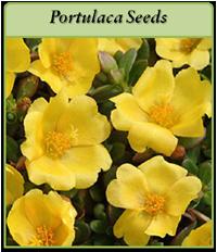 portulaca-seeds-logo.png