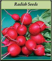 radish-seeds-logo.png