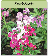 stock-seeds-logo.png