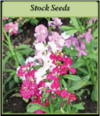stock-seeds-logo.png