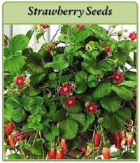 strawberry-seeds-logo.png