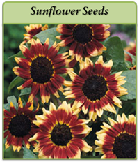 sunflower-seeds-logo.png
