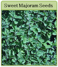Sweet Majoram Seeds