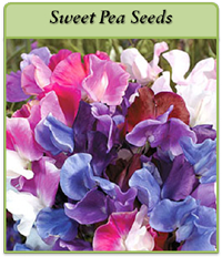 sweet-pea-seeds-logo.png
