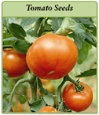 tomato-seeds-logo.png