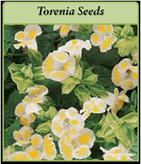 torenia-seeds-logo.png