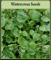 watercress-seeds-logo.png