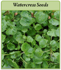 watercress-seeds-logo.png