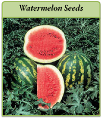watermelon-seeds-logo.png