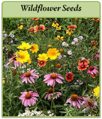 wildflower-seeds-logo.png