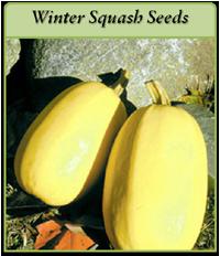 winter-squash-seeds-logo.png