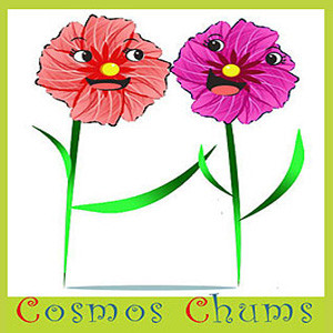 Cosmos Chums Seeds