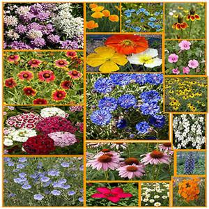 North American Wildflower
