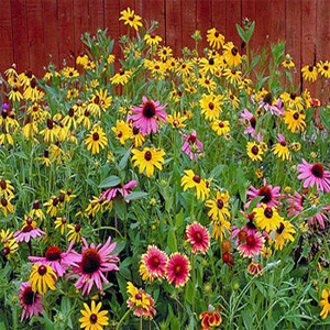 All Perennial Wildflower