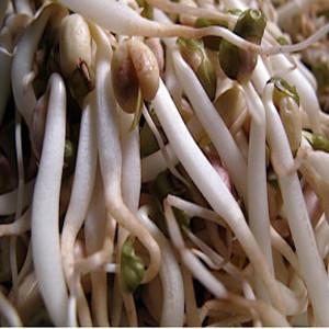 Bean Mung Bean Organic Sprouting Seeds
