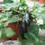 Container Patio Green Bush Zucchini