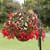 Bossa Nova® Formula Mix Tuberous Begonia Seeds