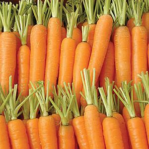Organic Carrot Seeds, Napoli