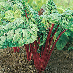 Organic Swiss Chard Seeds, Red Ruby
